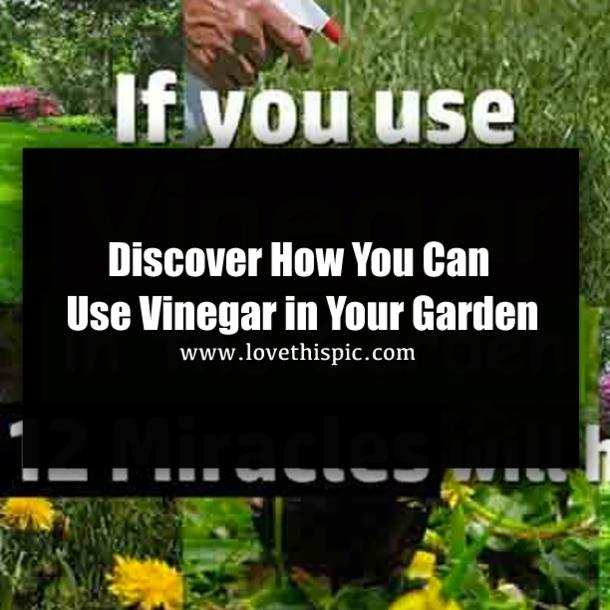 White vinegar is a gardener s best friend here are 12 clever uses in the garden for Vinegar in the garden