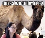 162100 Guess What Day It Is hump day camel pictures, photos, images, and pics for facebook