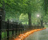 Rainy Day Pumpkins