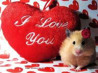 Cute Valentines I Love You QUote