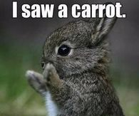 247741 I Saw A Carrot. This Big No Lie. easter memes pictures, photos, images, and pics for facebook