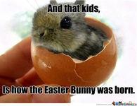 Funny Meme For Easter : Birthday easter meme easter best of the funny meme