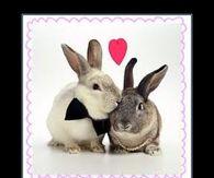 Easter bunny jokes adult humor