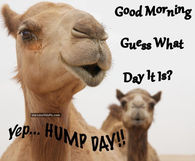 Image result for good morning hump day