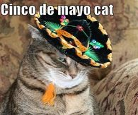 Funny Cinco De Mayo Memes Pictures, Photos, Images, and Pics for ...