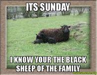 Funny Black Sheep Meme : Sheep protest freaking hilarious youtube