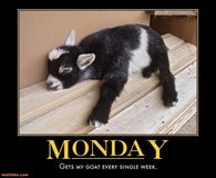Happy Monday Meme Funny : Monday meme images pictures photos images and pics for facebook