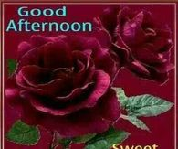 Good Afternoon Quote Pictures Photos Images And Pics For Facebook