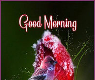 Winter Good Morning Quotes s and