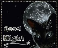 Black Cat Good Night Moon Gif Quote